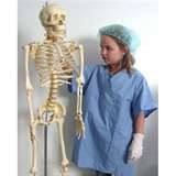 Skeleton with nurse